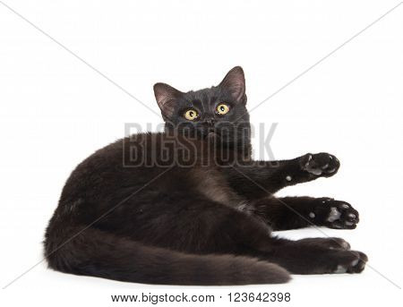 Cute Black Cat On White