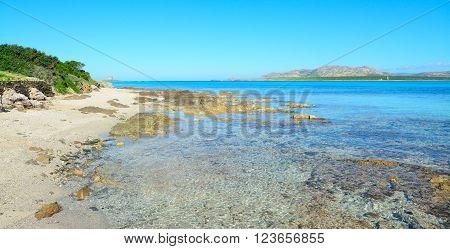 rocks and plants in Stintino shoreline Italy
