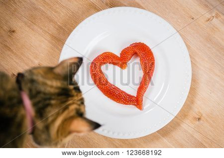 Red caviar in the shape of  heart on a plate and curious cat without supervision.