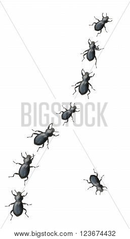 Creepy Crawly Black Beetles Marching In A Line On A White Background