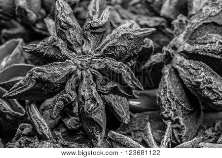 Black and White Focus on Single Star in Group of Star Anise shows the intricate texture of the spice
