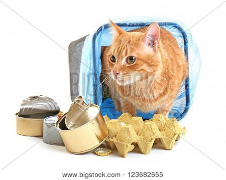 Red cat in inverted garbage basket, isolated on white