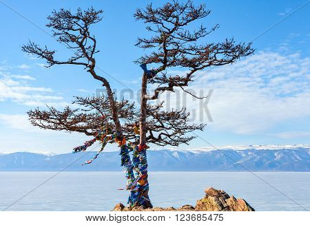 Olkhon Island in the Siberian Lake Baikal in winter. Lonely tree on a background of the holy Shamanka on cape Burhan.  Russia. Ice on Lake Baikal. Horizontal landscape