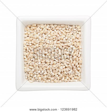 Barley grains in a square bowl isolated on white background