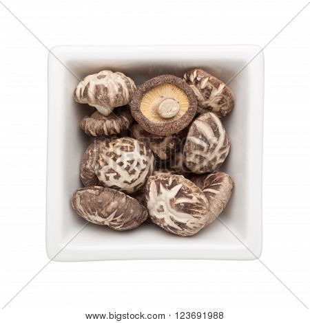 Shitake mushrooms in a square bowl isolated on white background
