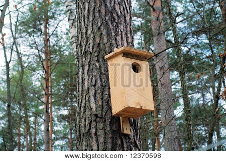 A birdhouse in early spring