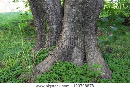 Tree trunk in ground cover growth close up