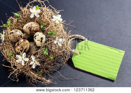 Quail eggs in nest with flowers and price tag