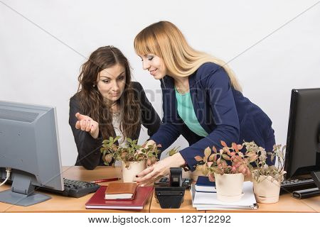One Office Employee Puts On A Workstation Other Employee Of Your Flowers