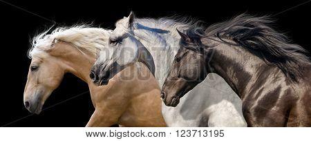 Horses portrait run  isolated on black background