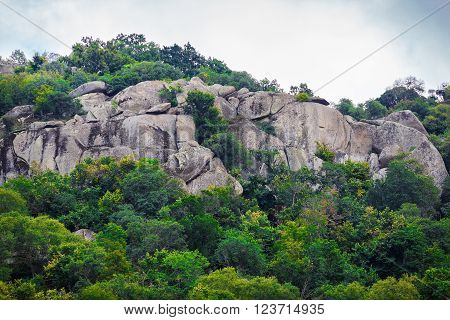 Rocks with huge boulders and thickets of green trees and thick foliage. Rocks with boulders and bushes.
