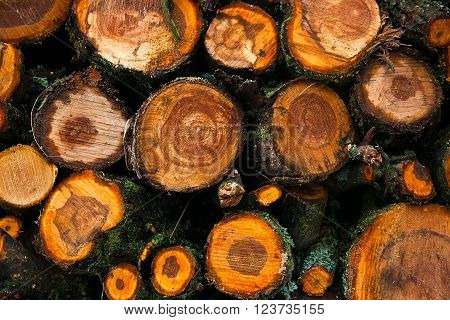 Big Pile Of Cut Tree Trunks For The Background.