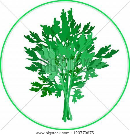 Parsley Bunch. A couple of twigs of parsley spice herb. Abstract composition with plant silhouette. Isolated on white. Vector file EPS8.