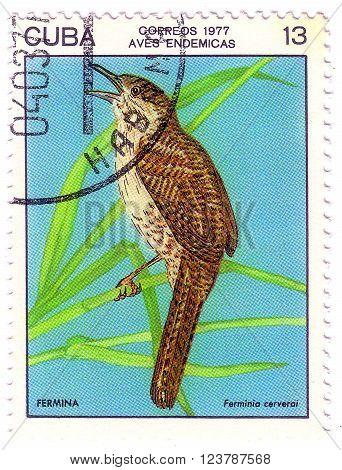 Cuba - Circa 1977: A Stamp Shows Image Of Ferrminia Cerverci, The Series