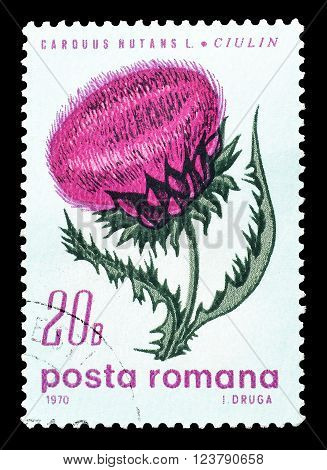 ROMANIA - CIRCA 1970 : Cancelled postage stamp printed by Romania, that shows Musk thistle.