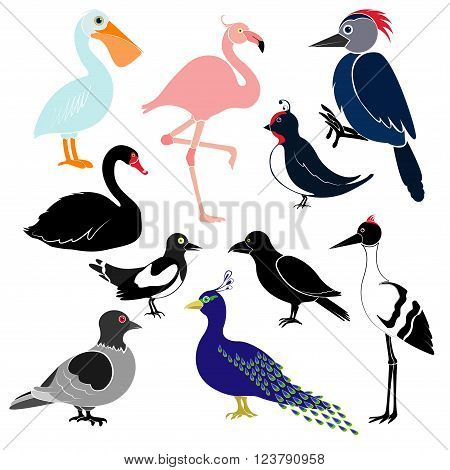 Different birds isolated on white background. Pelican flamingo woodpecker swan magpie swallow crows cranes peacock pigeon.