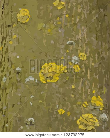 Tree bark with lichens vector texture or background