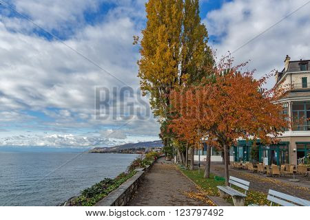 Red tree on embankment in Montreux, canton of Vaud, Switzerland