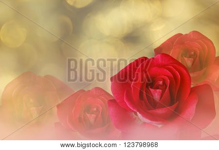Romantic Red Roses On Bokeh Abstract Valentine Background