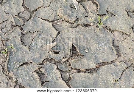 Closeup Of Dried And Crackled Ground Texture With Shoot Green. .
