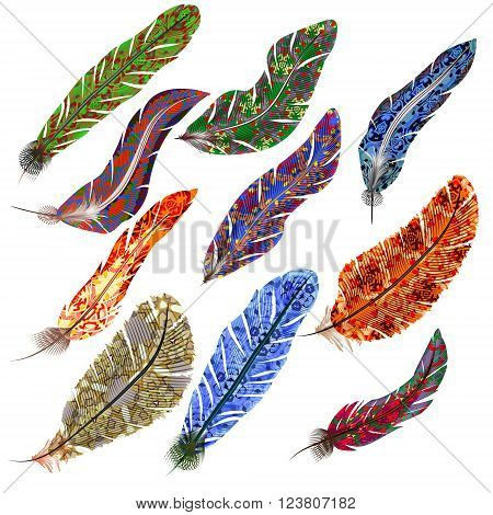 Vector set of colorful bird feathers on a white background
