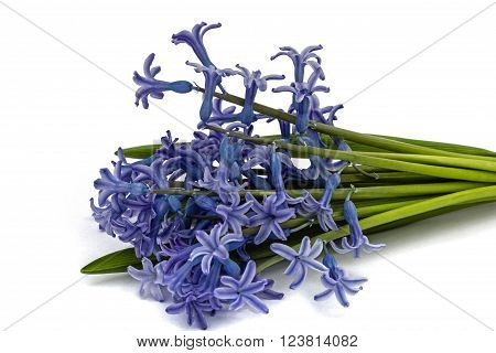 Bouquet of flowers of hyacinth isolated on white background