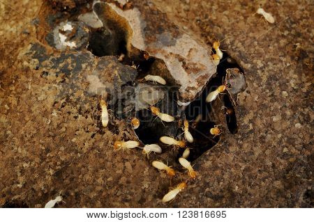 Close up of Termites in the frame