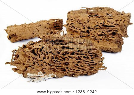 Brown Termite nest at on white background