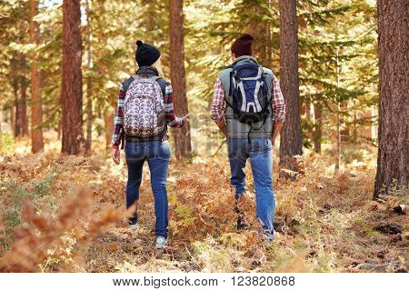 Couple talking on hike in forest, back view, California, USA