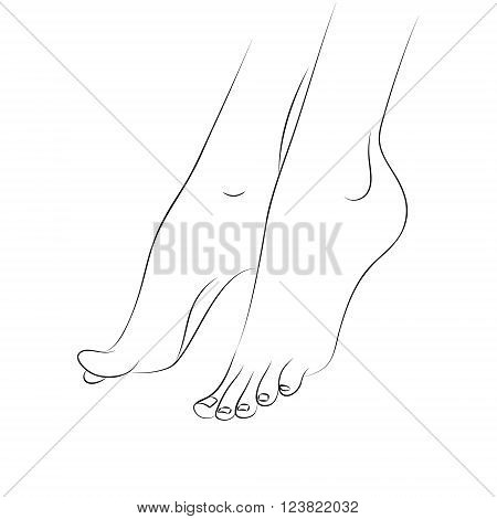Woman's feet outline vector isolated on white background. Pedicure podiatry and body care vector concept. Line drawing body parts. Design element for web icons pedicure spa brochures fliers