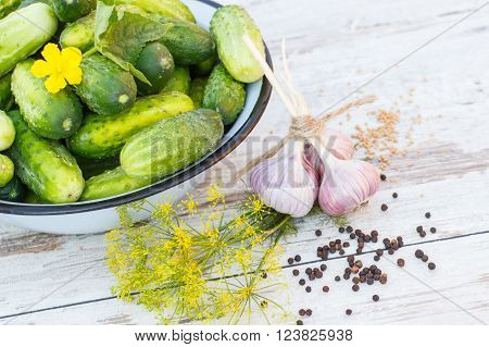 Ripe cucumbers in metal bowl and spices for pickling cucumbers on old white wooden table in garden on sunny day healthy nutrition