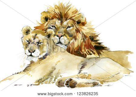Lion. Lion pride watercolor illustration. Lion family