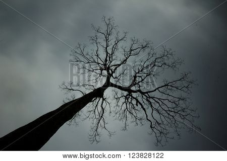 Lonely dead tree with sky full of dark clouds. View from below. Concept of mystery, grief,sadness,darkness,loneliness,horror,fear.