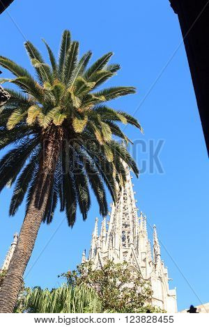 Palm tree and church Barcelona Cathedral steeple tower