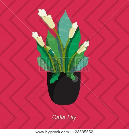 Illustration of houseplant, indoor and office plant in pot. Vector plant calla lily in pot. Flat calla lily, vector icon of calla lily. Office plant in pot.