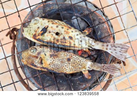 Puffer on the grill ready to eat