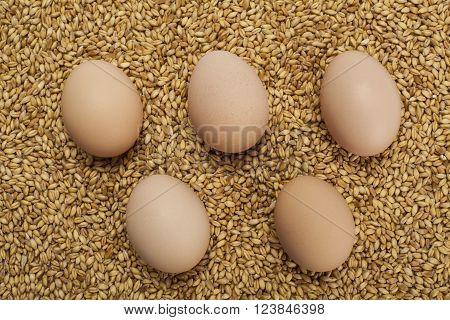 five chicken eggs standing on wheat grains