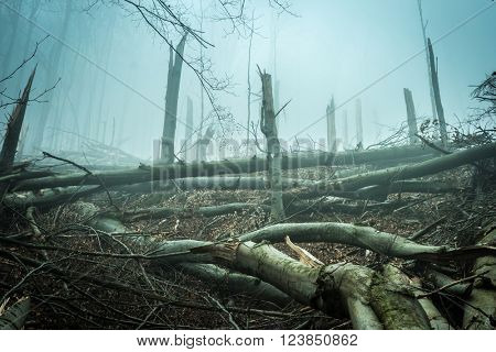 fallen by storm trees in forest