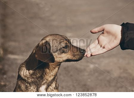 Helping child hand and lonely homeless dog with sad eyes
