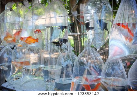 BALI INDONESIA - March 7 2016: Collectable tropical fish are sold in plastic bags at the side of the road on March 7 2016 in Ubud Bali Indonesia.