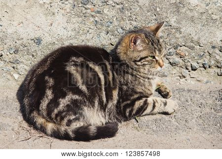 Lazy gray striped cat is sleeping outdoors