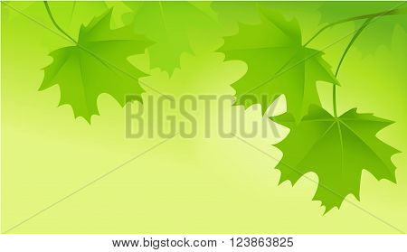 Nature vector  background with green  tree leaves