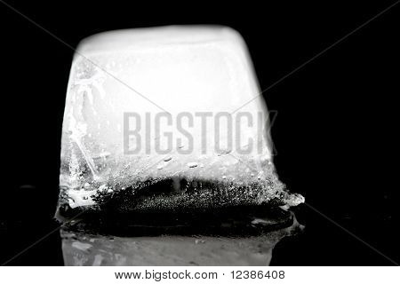 Icecubs