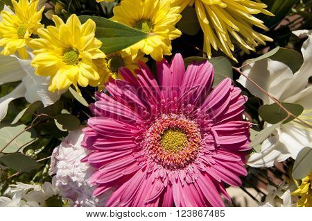 background of flowers and nature, spring concept and joy
