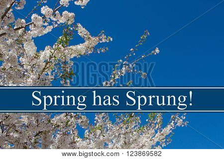 Spring has Sprung Message A tree in full bloom with blue sky and text Spring has Sprung