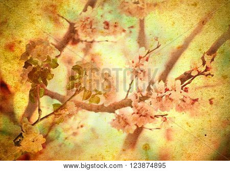 Beautiful background with cherry blossoms. Flowers vintage background