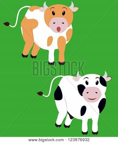 two cute fun spotted cow,  isolated cartoon calf
