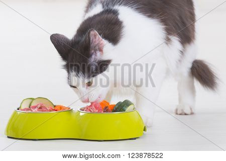 Black and white cat eating natural, organic food from a bowl at home