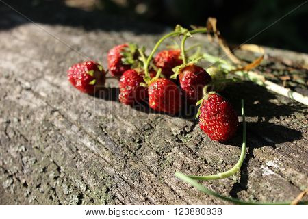 Strawberries on wooden log. Strawberries with stem on the old wooden log in the sunshine. Red berries freshly picked up. Growing strawberries.