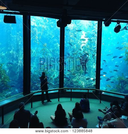 MONTEREY - MARCH 2: Visitors view fish being fed in the Kelp Forest tank at The Monterey Bay Aquarium the on March 2, 2016 in Monterey, California, USA.